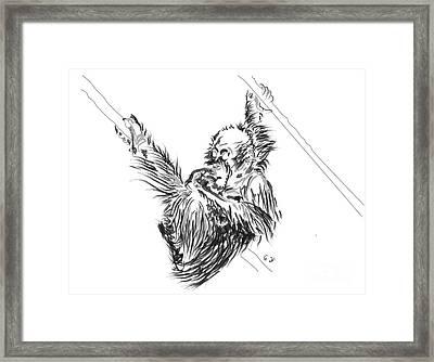 Orangutan Baby 2 Framed Print