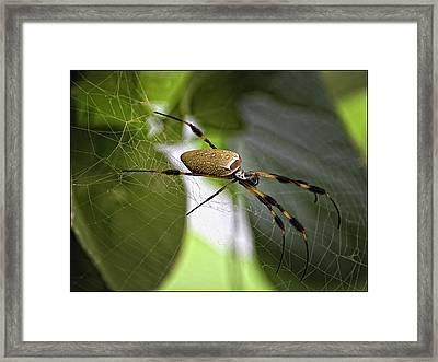Orb Spider 2 Framed Print by Lynn Andrews