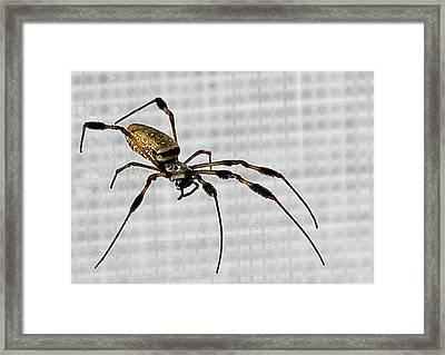 Orb Spider 4 Framed Print by Lynn Andrews