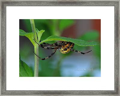 Framed Print featuring the photograph Orb Weaver Spider by Karen Slagle