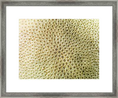 Orbicella Annularis Framed Print by Natural History Museum, London