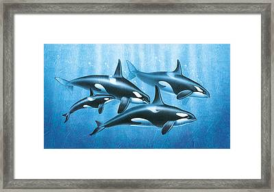 Orca Group Framed Print by JQ Licensing