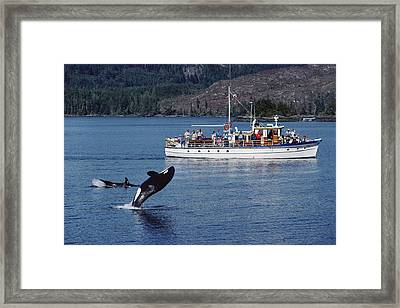 Orca Leaping And Whale Watchers Framed Print