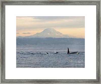 Orcas And Mt. Rainier II Framed Print