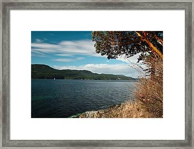 Orcas Dreams Framed Print