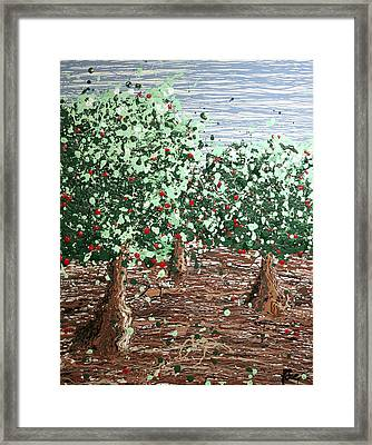 Orchard 4 Framed Print by Ric Bascobert
