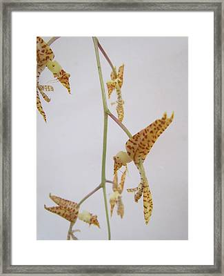 Orchard Compositon Framed Print
