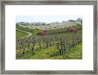 Orchard In France Framed Print
