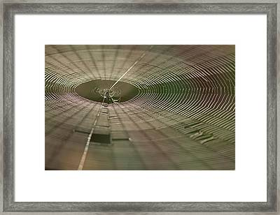 Framed Print featuring the photograph Orchard Orbweaver #1 by Paul Rebmann
