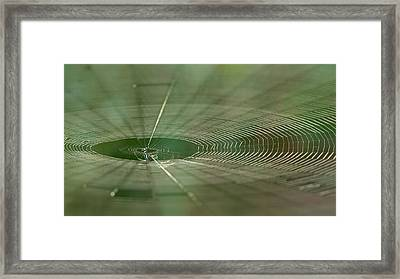Framed Print featuring the photograph Orchard Orbweaver #2 by Paul Rebmann