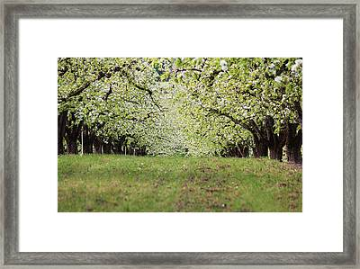 Framed Print featuring the photograph Orchard by Patricia Babbitt