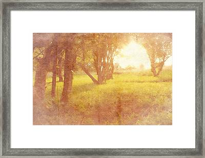 Orchard View Framed Print by Brett Pfister