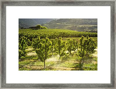 Orchards In The Mist Framed Print by Maria Janicki