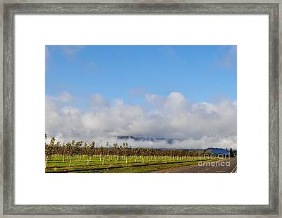 Orchards In The Sun Framed Print
