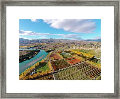 Orchards, Poplar Trees, And Lake Framed Print