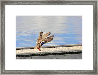 Orchestra Conductor In The Wild Framed Print