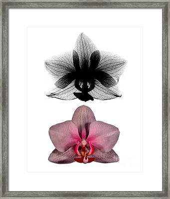 Orchid And Its X-ray Framed Print by Bert Myers
