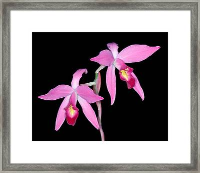 Orchid 1 Framed Print by Andy Shomock