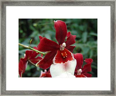 Orchid 1 Framed Print
