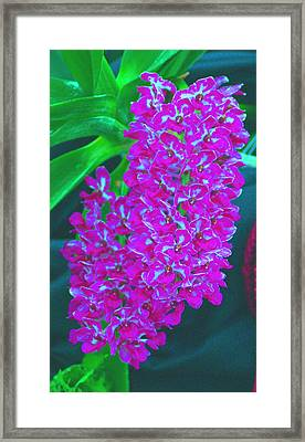 Orchid 14 Manipulated Framed Print