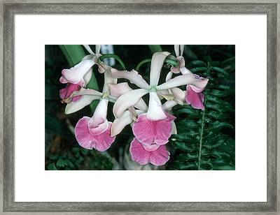 Orchid 17 Framed Print by Andy Shomock