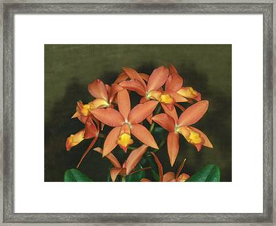 Orchid 3 Framed Print by Andy Shomock