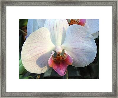 Orchid 3 Framed Print