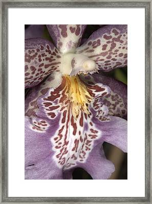Orchid 483 Framed Print