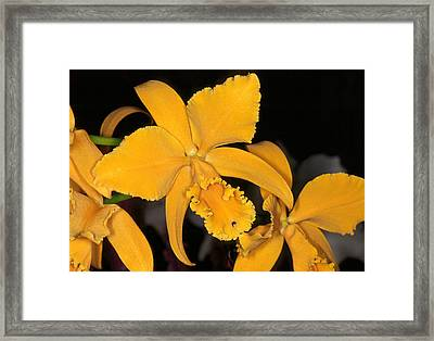 Orchid 5 Framed Print by Andy Shomock