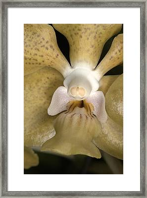 Orchid 500 Framed Print