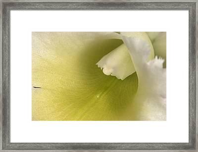 Orchid 501 Framed Print
