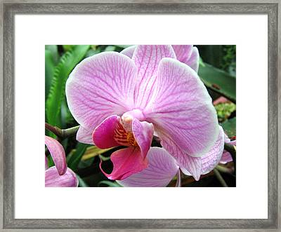 Orchid 7 Framed Print