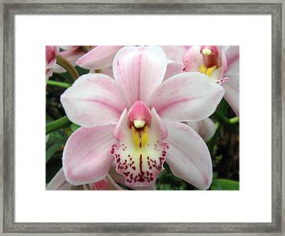 Orchid 8 Framed Print
