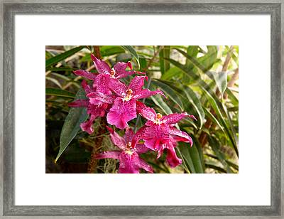 Orchid - A Pleasant Surprise  Framed Print