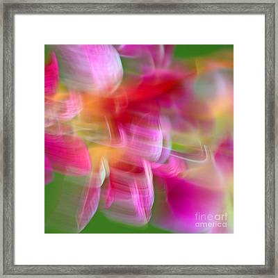 Orchid Abstract Square Framed Print