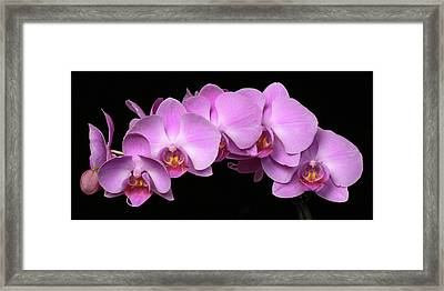 Orchid Arch Framed Print