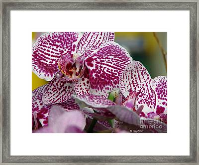 Orchid Art Framed Print by Greg Patzer