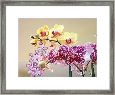 Orchid Art Prints Orchids Flowers Floral Bouquets Framed Print