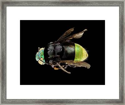 Orchid Bee Framed Print by Us Geological Survey