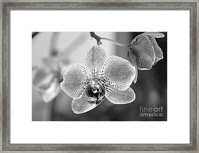 Orchid Black And White Framed Print by Ramona Matei