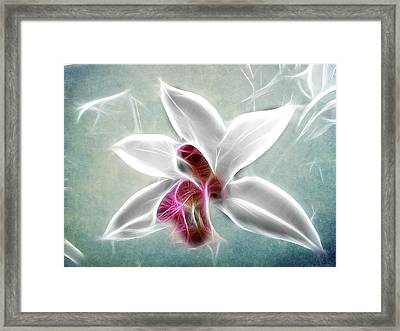 Orchid Blues Framed Print by Fiona Messenger