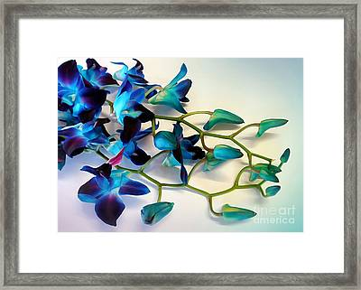 Orchid Bouquet Framed Print by Kaye Menner