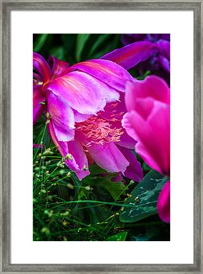 Orchid Cactus Framed Print