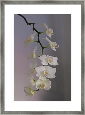 Orchid Cascade Framed Print