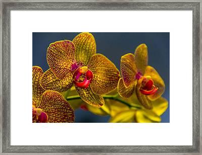 Orchid Color Framed Print