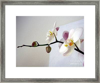 Orchid Coming Out Of Painting Framed Print