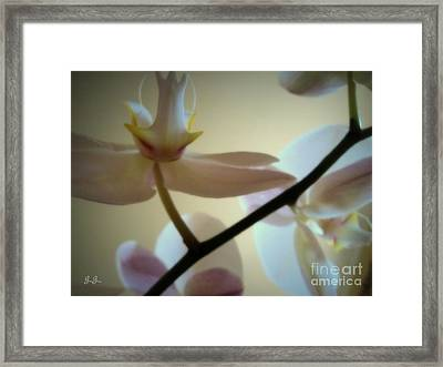 Framed Print featuring the photograph Orchid Composition by Geri Glavis