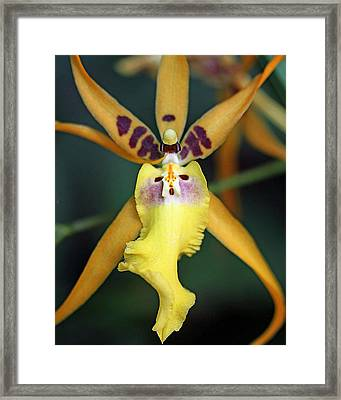 Orchid Creature Wispy Framed Print by Alan Olansky