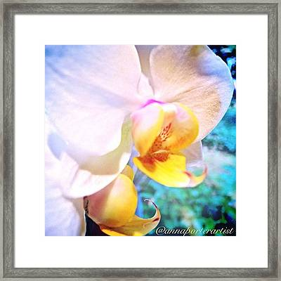White Christmas Orchid Framed Print