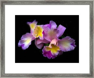 Orchid Embrace Framed Print by Jessica Jenney